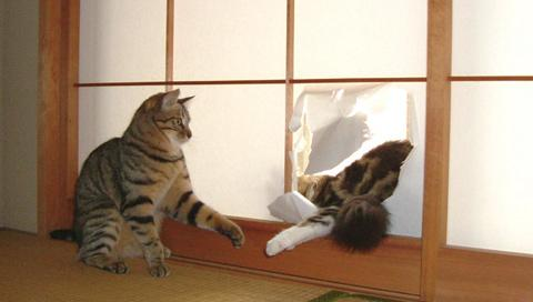 JPhousecats.jpg