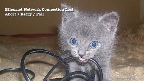 Kittynet.jpg
