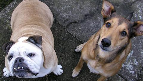 dogs_psp.jpg