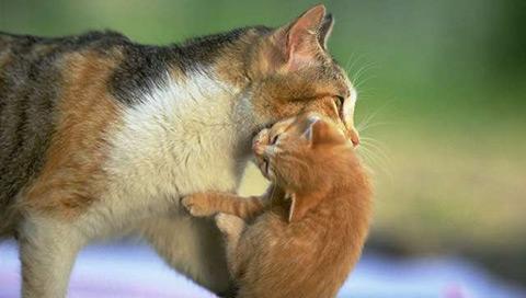 kittycarry.jpg