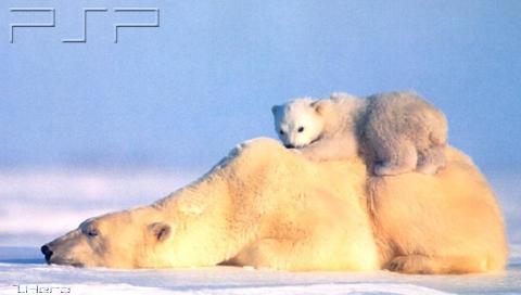polarfam.jpg