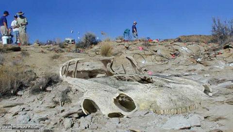 FossilJaguar.jpg