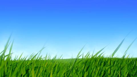 grass~0.jpg